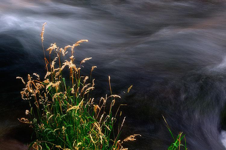 _HDR5436e grass