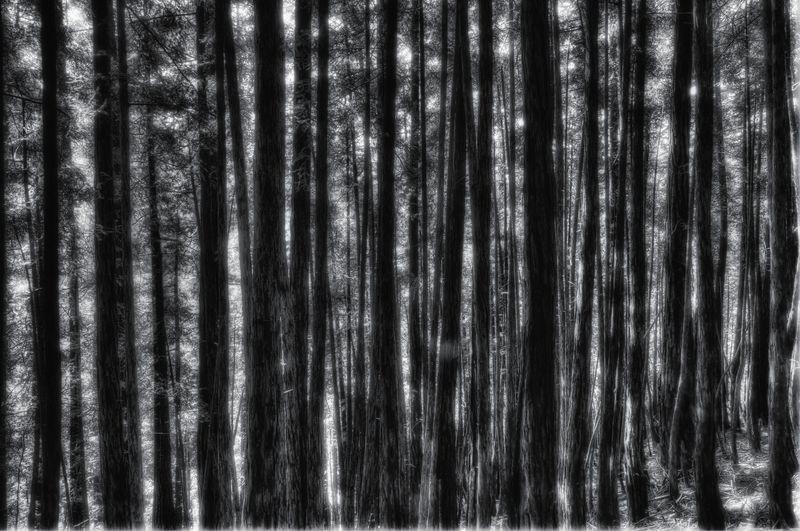RedwoodPeekaBoo
