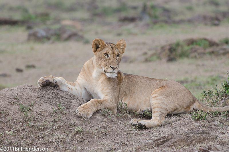 20110608 Mara564