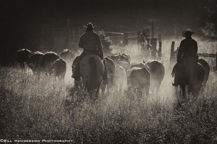 Cowboy214-Edit