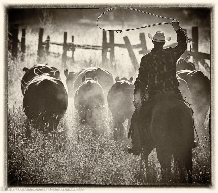 Cowboy953-Edit