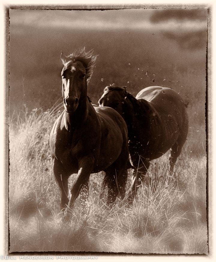 Cowboy2121-Edit