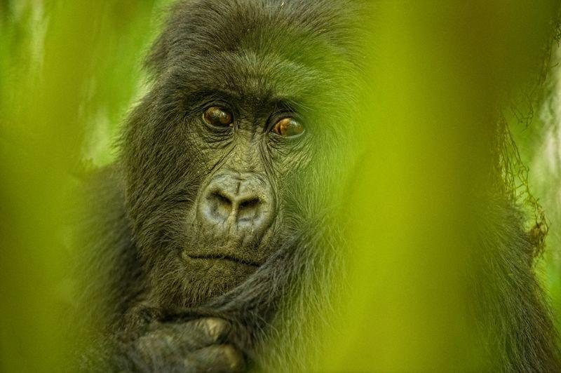 Rwanda013P