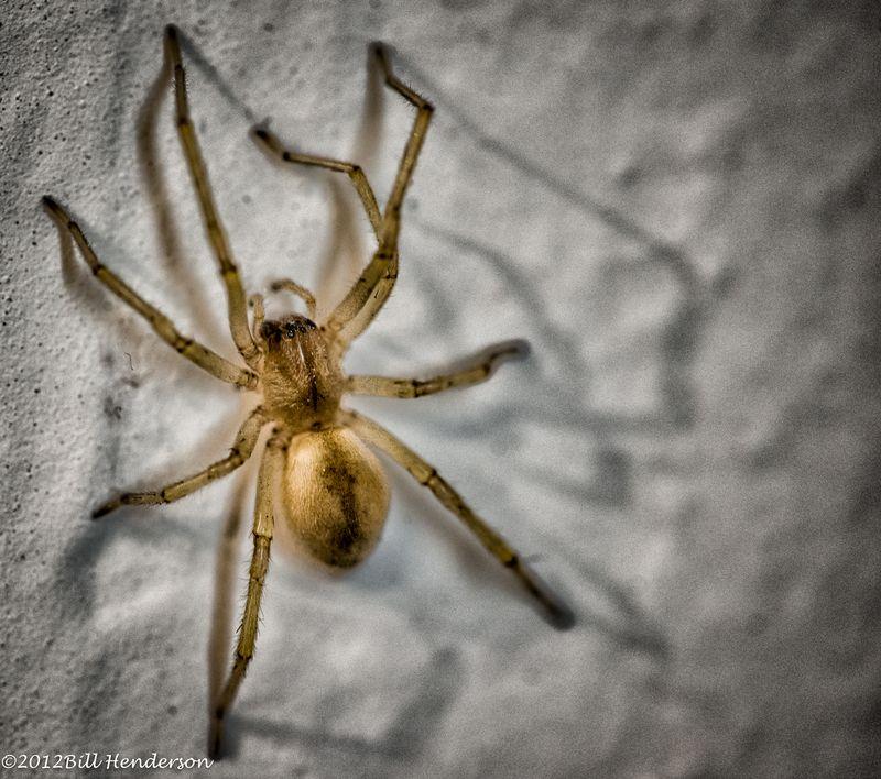20121007019_studio,spider-Edit